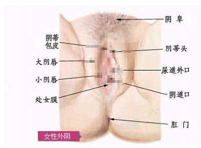 女人的下体有毛图片 青春期女孩阴部长毛图