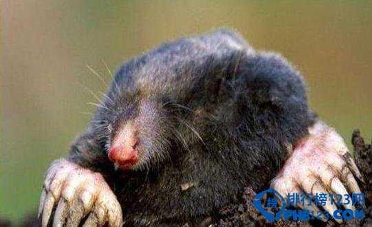 安哥拉兔认主人吗 地球十大最可爱动物排行榜