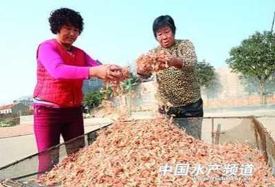 多少虾能晒一斤虾干 12斤鲜虾晒出一斤海米