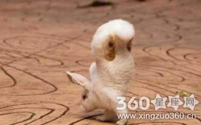 如果你真打算养一只可爱的兔子,请先为它挑选一个萌萌的宠物名字吧!
