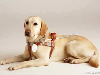 世界上最可爱的狗宝宝 世界上最可爱的十大狗狗