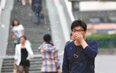 北京杨树 北京飞絮杨树还有200万棵