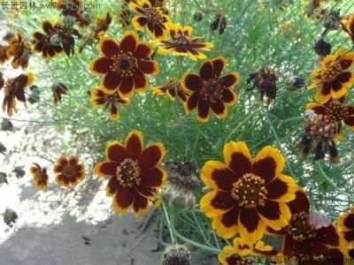 黄色花的植物 黄色花的草本植物有哪些