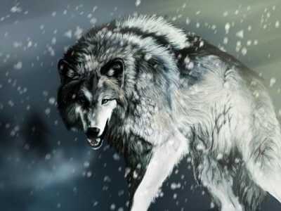 扑狼行动 狼是它们的阎罗王
