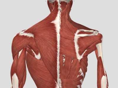 人体所有肌肉 人体肌肉层层分布的意义
