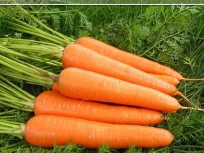 胡萝卜与萝卜的区别 原来红色胡萝卜和黄色胡萝卜也有区别