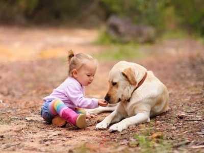 """比格犬可以吃哪些零食 一段时间后就能成为""""亲人""""般的存在"""