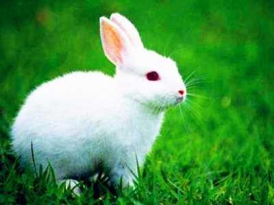 兔子吃提摩西草会撑吗 兔子吃什么草会死