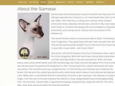 东方短毛猫和暹罗猫 因为脸黑被人戏称挖煤的