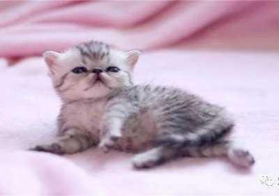 奶猫吃什么 小奶猫饲养指南