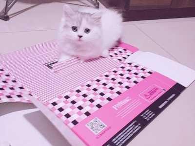 如何给宠物猫驱虫 猫身上有跳蚤怎么办保护猫咪从驱虫做起