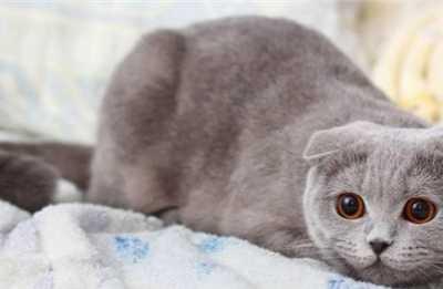 折耳猫一直拉肚子 导致折耳猫拉稀的原因都有哪些