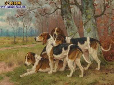比格犬能长多重 比格犬和金毛哪个好