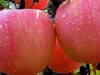 苹果酒制作 小型酿酒作坊