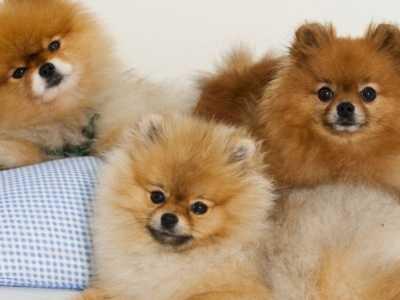 小型狗品种 适合家养的小型狗聪明又好养