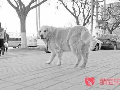 大型犬排名 盘点排名前五的大型犬