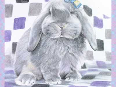 垂耳兔是不是灰色最多 彩色铅笔画步骤教程