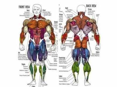 人体所有肌肉 健身先了解人体肌肉解剖图