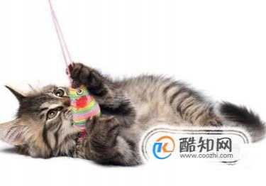 猫掉毛严重怎么办 小猫掉毛怎么办