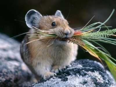仓鼠拉绿色便便巨臭 仓鼠为什么会变臭