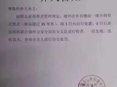 北京禁养宠物 宠物医院安乐死排起了长队