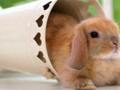 兔子打喷嚏流清鼻涕 兔子打喷嚏但很活泼
