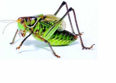 宠物昆虫 可以当宠物养的四种昆虫