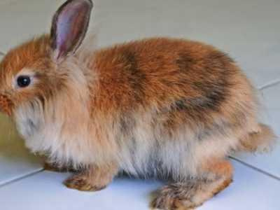 兔子下崽后多久能配种 兔子要多久才能配种