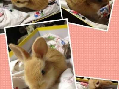 兔子在窝里拉屎怎么办 怎么培养兔子在兔子厕所里去尿尿和大便~