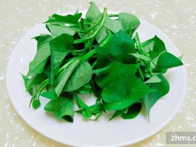 减肥期间吃水煮青菜 减肥你吃对了吗