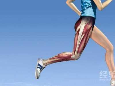 先练小腿好还是大腿 腿部肌肉可以天天练吗