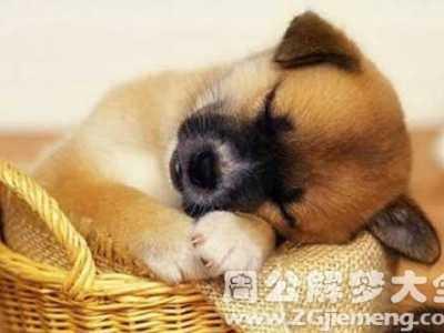 孕妇梦见一只狗 孕妇梦见一只大狗