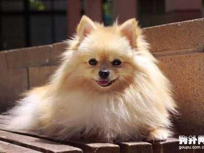 狗狗打疫苗隔几天又打 在狗狗出生后需要打几次疫苗